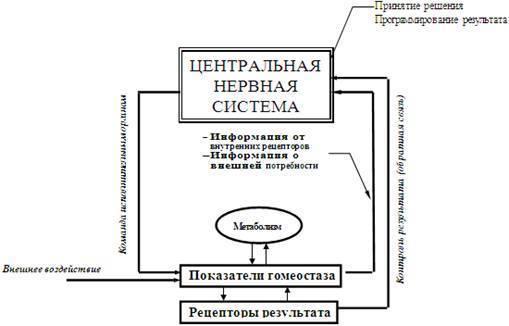 Механизмы поддержания гомеостаза