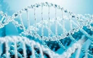 Клеточное строение организма человека