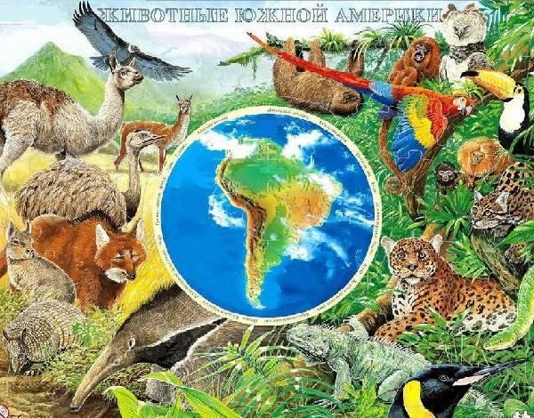 Млекопитающие южной америки