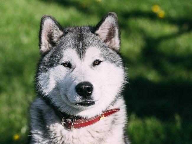Сочинение на тему щенок