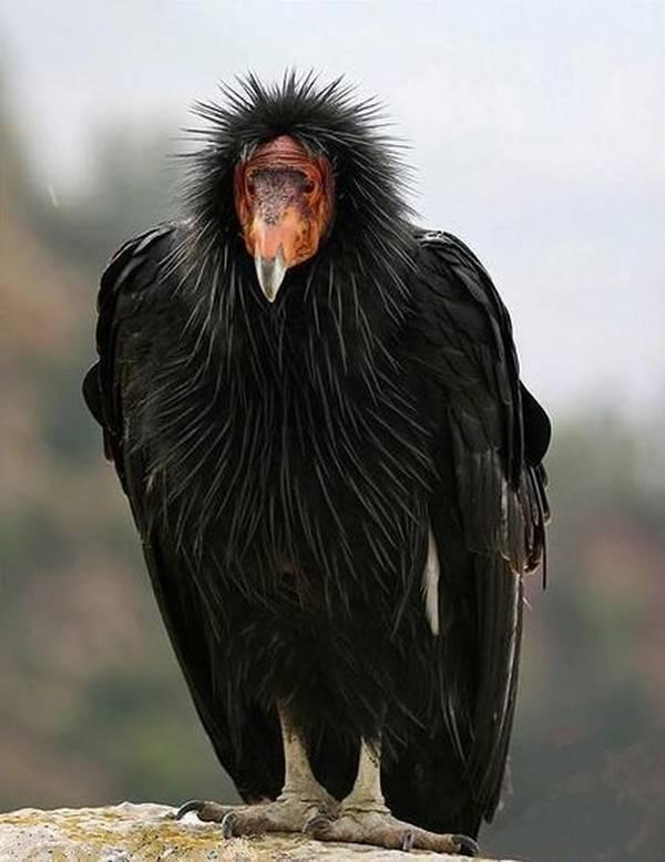 Какие птицы являются перелетными