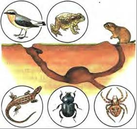 Примеры нахлебничества в природе