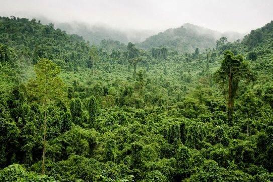 Типы лесов россии