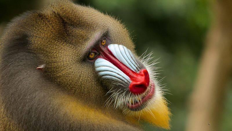 Какие животные живут в африке список