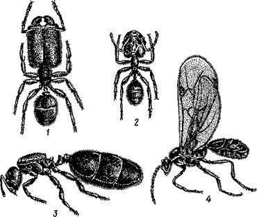 Животные определение в биологии