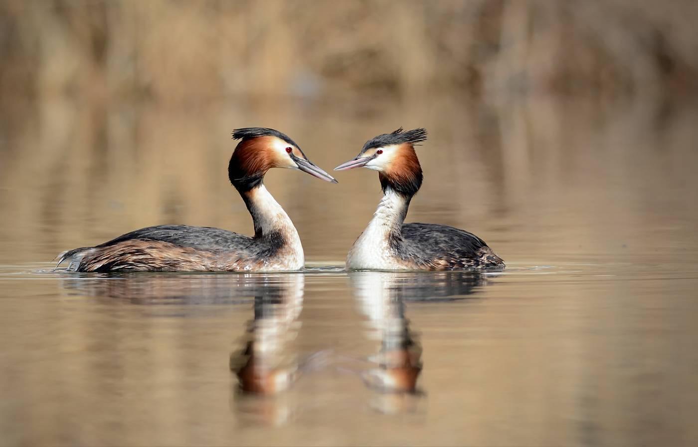 Животные пресных вод