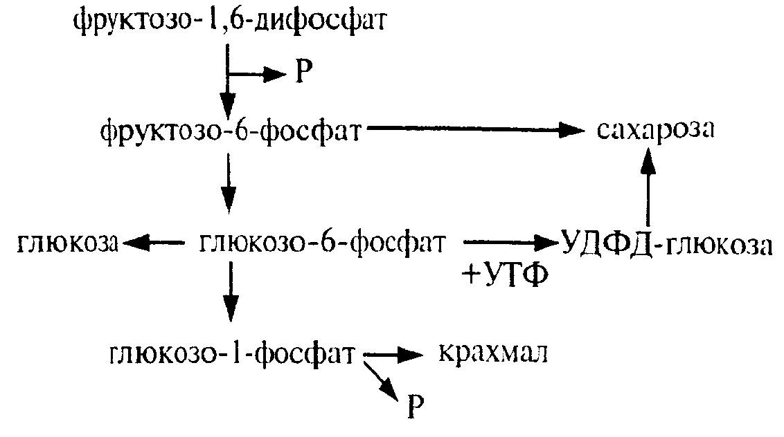 Темная фаза фотосинтеза