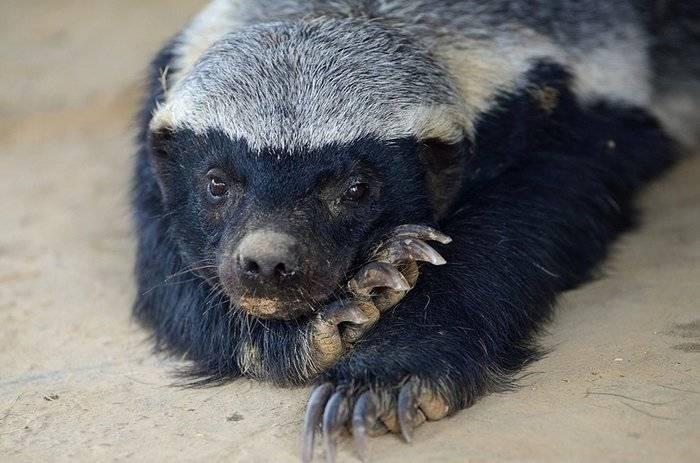Редкие животные казахстана