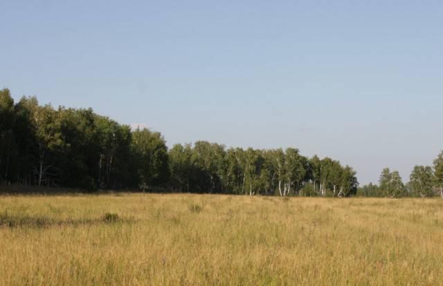 Степи и лесостепи россии