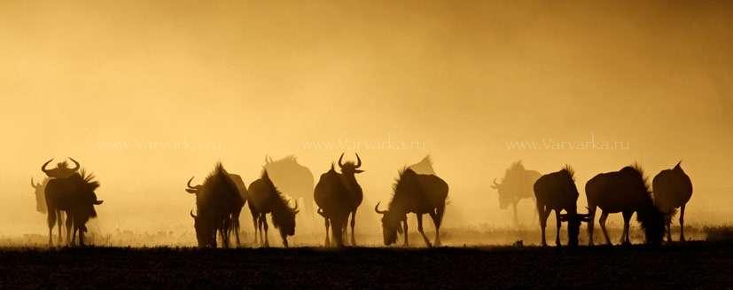 Как выглядит антилопа