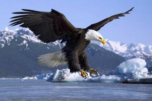 Виды хищных птиц фото и названия