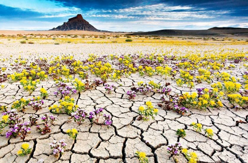 Этим отличается пустыня от гор
