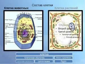 Открытие цитоплазмы