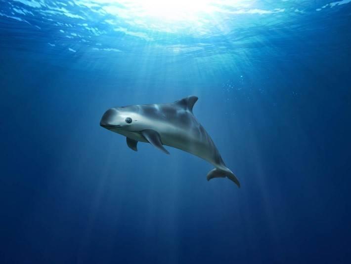 Какие животные обитают в тихом океане