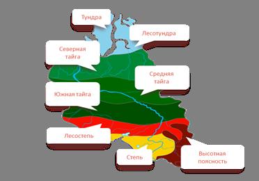 Природная зона сибири