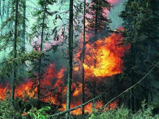 Каковы пути сохранения лесов планеты