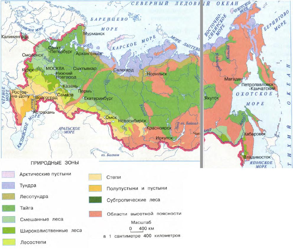 В какой природной зоне расположена россия
