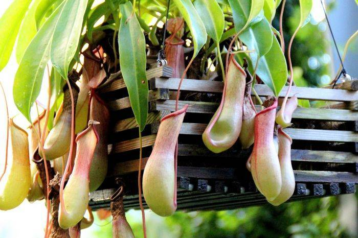 Информация о редких растениях