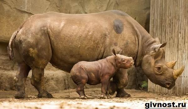 Где обитают носороги