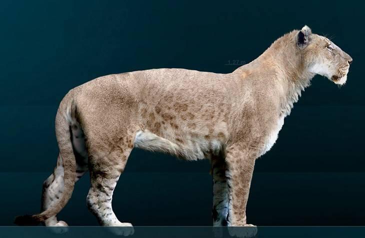 Доисторические кошки