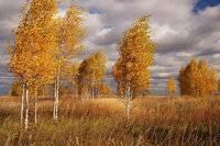 В каких климатических поясах расположена территория россии