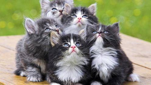 Обыкновенная кошка