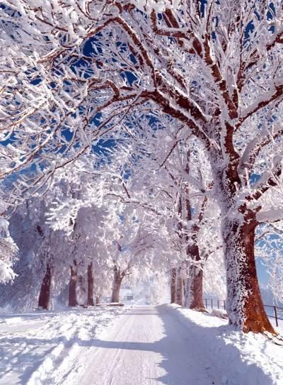 Сочинение ранняя зима