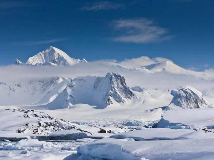 Почва арктики