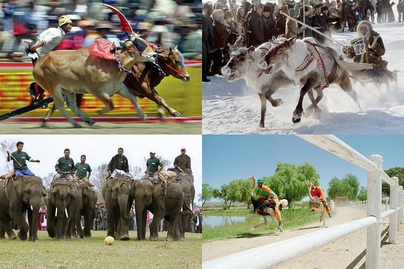 Скорость слона при беге