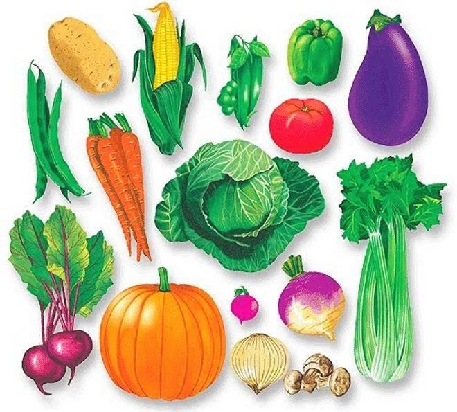 Картинки овочів для дітей