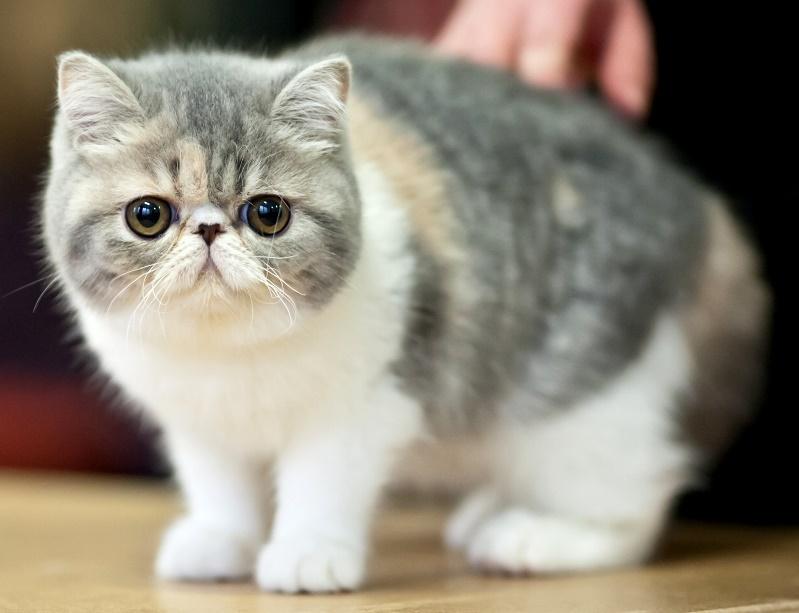 Топ 10 пород кошек