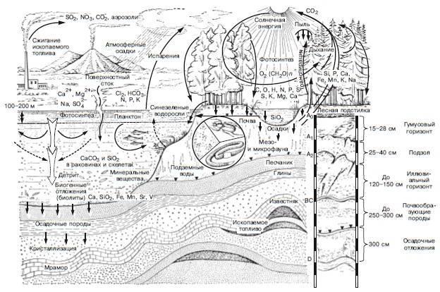 Толщина биосферы