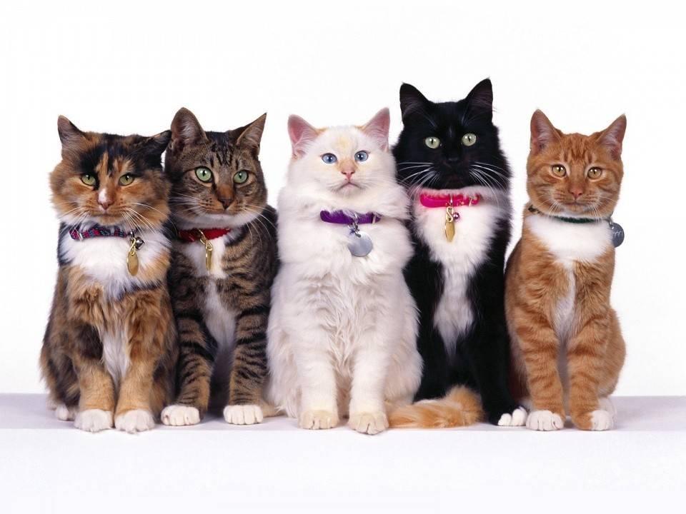 Что дают нам животные