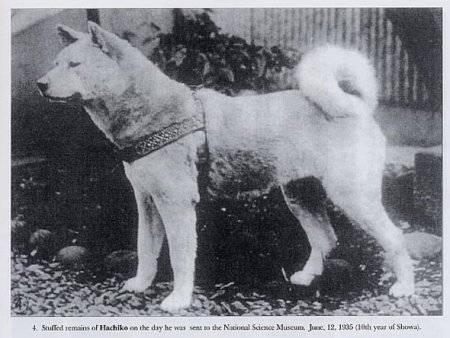 Фото настоящего хатико и его хозяина