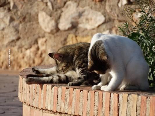 Что нравится кошкам