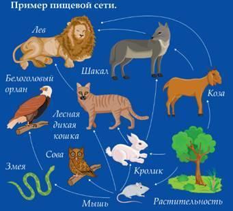 Схема пищевой цепи