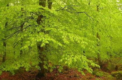 Сочинение на тему прогулка в лесу