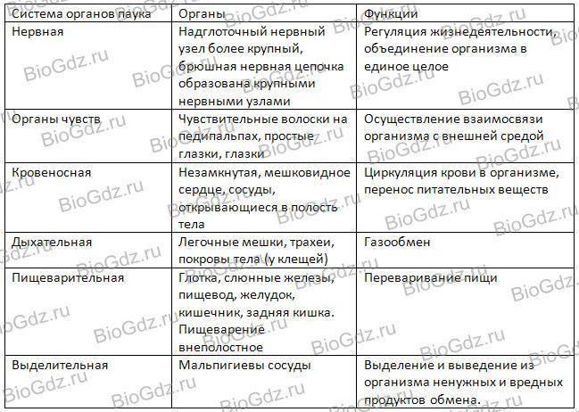 Класс паукообразные таблица