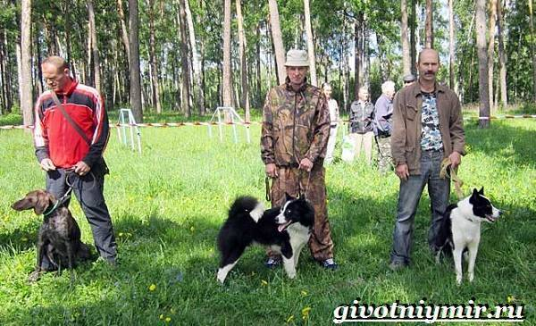 Щенки охотничьих собак