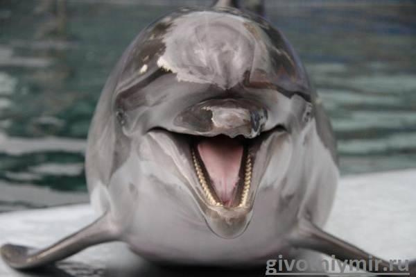 Особенности дельфинов