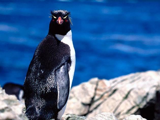 Как называются крылья пингвинов