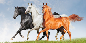 Сколько лет живут лошади в среднем