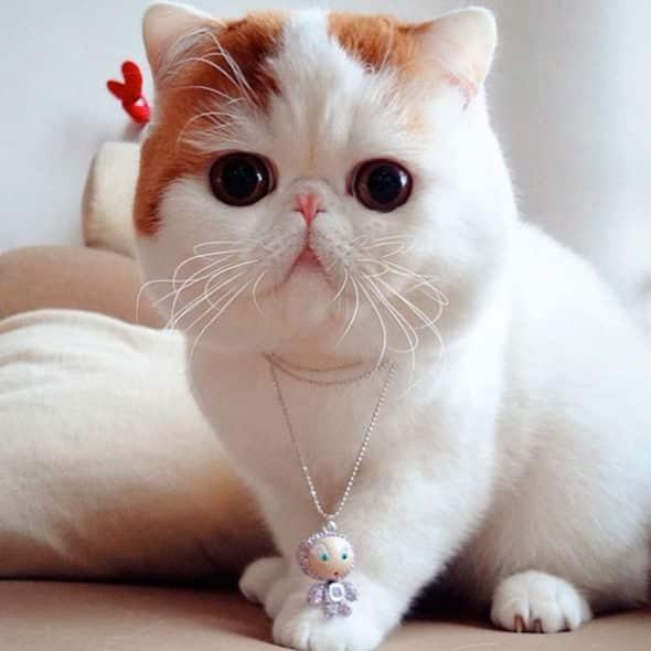 Кошки в китае