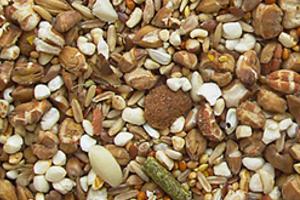 Что едят мыши в природе