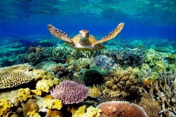 Океаны омывающие австралию