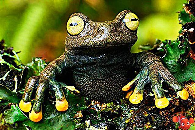 Земноводные животные список фото с названиями
