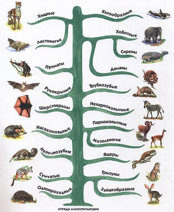 Млекопитающие отличаются от пресмыкающихся наличием следующих признаков