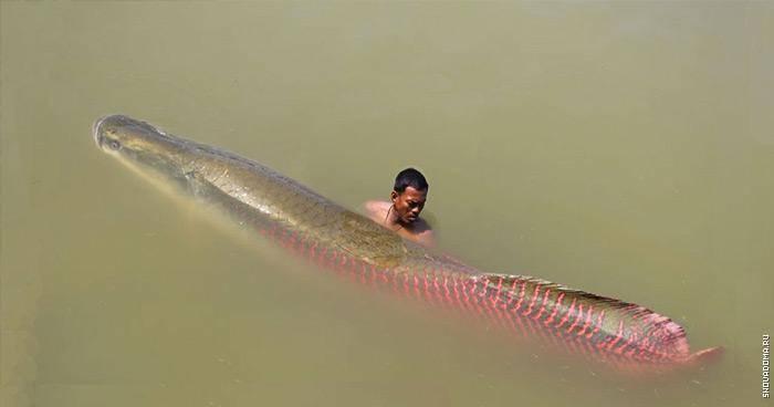 Протяженность реки амазонка