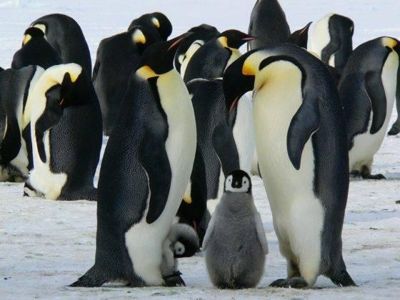 Где живет белый медведь и пингвин