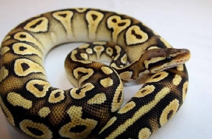 Змея позвоночное или беспозвоночное